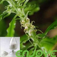 Lycopodium serratum Thunb sales08@nutra-max.com