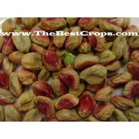 Top quality Pistachio in shell thumbnail image