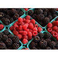 Fresh Berries , Cherries , for Sale thumbnail image