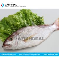 RED MULLET - CRIMSON SNAPPER - RED SNAPPER - FROZEN FISH SEAFOOD - FILLET - PORTION - CUT