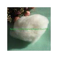 white sheep cashmere
