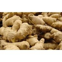 Chinese fresh ginger thumbnail image