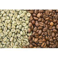 Arabica and Robusta Coffee thumbnail image