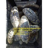 SPECIAL SEAFOODS SEA CUCUMBER Jenny +84 905 926 612