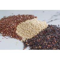 Quinoa thumbnail image