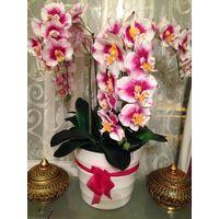 manufacture wholesale Orchid flower /Orchid plants/orchid