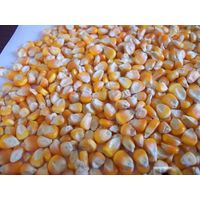 Yellow corn FOB Russia