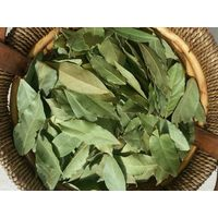 Turkish Hand Selected Bay Leaves,Bay Leaves Granulated