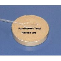 Brewers Yeast for animal feed thumbnail image