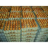 FRESH TABLE  EGGS