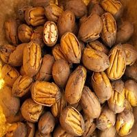 Pecan Nut Roasted Salted Pecans/Raw Pecan Nuts With Shell for sale thumbnail image