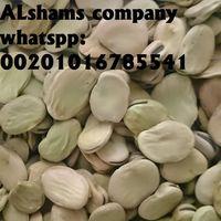 dried broad beans thumbnail image