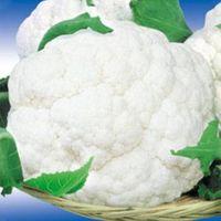 Hybrid vegetable seed/Cauliflower seed- FST 9801