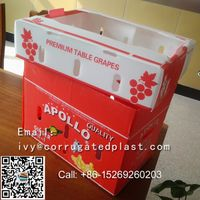 RECYCLABLE PLASTIC CORN BOXES WITH HIGH QUALITY thumbnail image
