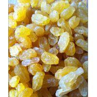 golden raisins thumbnail image