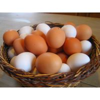 Fertile and Fresh Table Chicken Eggs for Sale