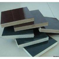 shuttering plywood supplier