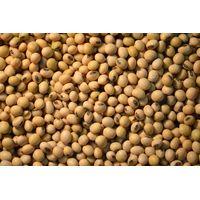 Soya beans (Non GMO) thumbnail image