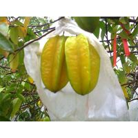 banana growing plastic bag,fruit growing paper bag