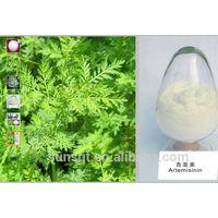 Artemisia Annua Extract, Herbal Extract