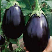 Round Black Eggplants