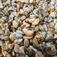 Frozen Cooked Blue Mussel Meat