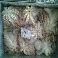 Sell frozen octopus