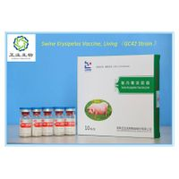 Swine Erysipelas Vaccine, Living(GC42 Strain)