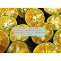 CALAMANSI FRUIT WITH HIGH QUALITY-FROZEN /FRESH/ PUREE CALAMANSI FRUIT