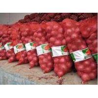 fresh red onion/ yellow onion