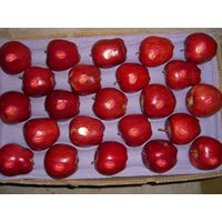 huaniu apple fresh red apple in shandong shaanxi shanxi from China thumbnail image