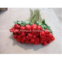 Extra large/big rose