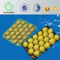 29x49cm SGS/FDA Testing Different Count PP Kiwi Packaging Tray