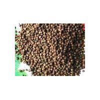 Black Pepper Extract: Piperine