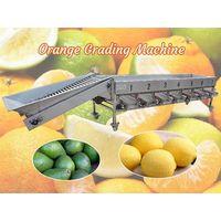 Orange grading machine   Fruit size sorting machine