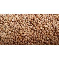 sorgham seeds