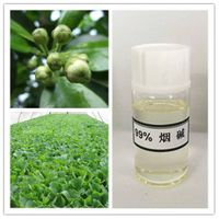 High Purity 99% Nicotine for Intermedite of Pesticide and Medicine
