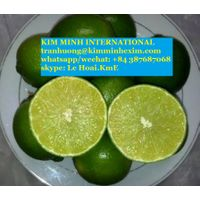 FRESH LEMON FRUIT/ FROZEN LEMON FRUIT( WHOLE,HALF CUT, SLICED,...)/FROZEN LEMON JUICE