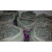 PKM Moringa Seeds for Exportation thumbnail image