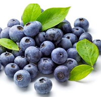 Blueberry Extract Powder 4:1,10:1,20:1,30:1