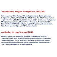 Recombinant antigen and antibody