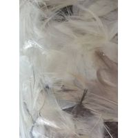 80% Grey duck feathers