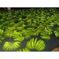 Cavendish Bananas thumbnail image