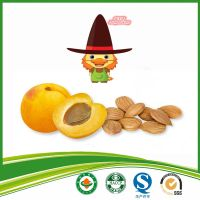 dried sweet apricot kernel
