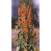 Quinoa Saponins (Chenopodium Quinoa Willd). thumbnail image