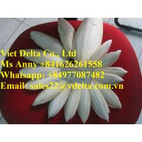 Dried Cuttlefish Bone from Vietnam