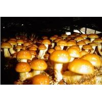 Frozen Mushrooms/Nameko