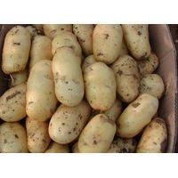 2016 fresh potatoes fresh sweet potatoes fresh holland potatoes