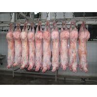 HALAL FRESH / FROZEN GOAT / LAMB / SHEEP MEAT / CARCASS thumbnail image