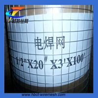 Best SellingGalvanized Welded wire mesh(ISO9001)